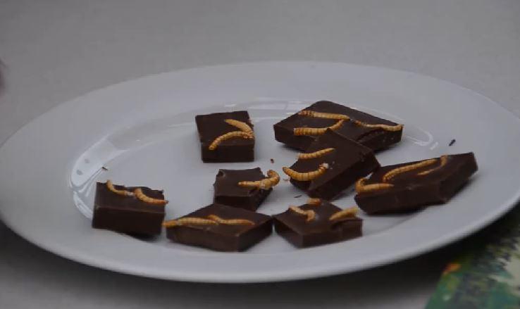Schokolade mit Mehlwürmern. Was in Deutschland vor allem als Party Gag serviert wird, gehört in vielen Ländern Asiens bereits zur alltäglichen Ernährung.